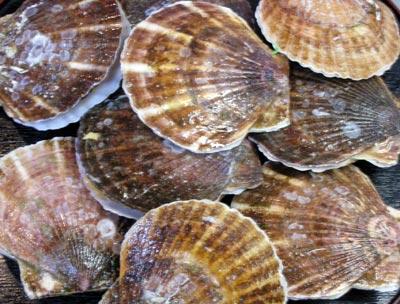 北海道産の帆立貝