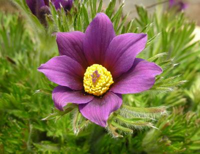 百合が原の花