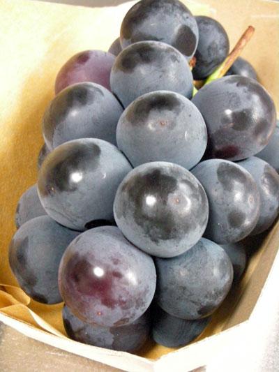 美味しい葡萄
