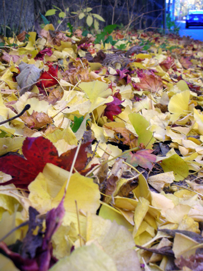 北海道大学の秋