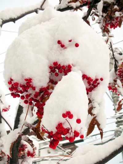 札幌の積雪