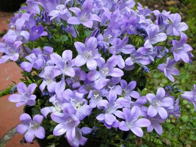 我が家で咲いてる花