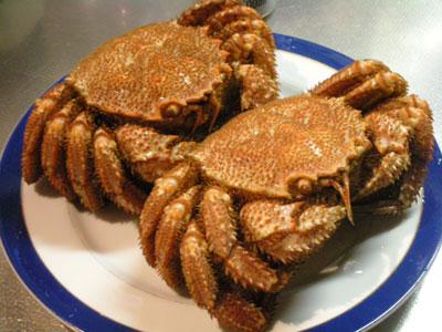 北海道長万部産の毛蟹