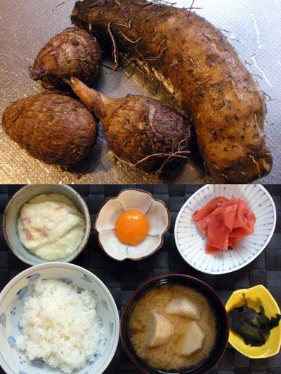 自然薯と無農薬栽培の里芋