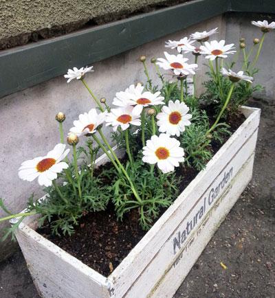 今年の庭の花