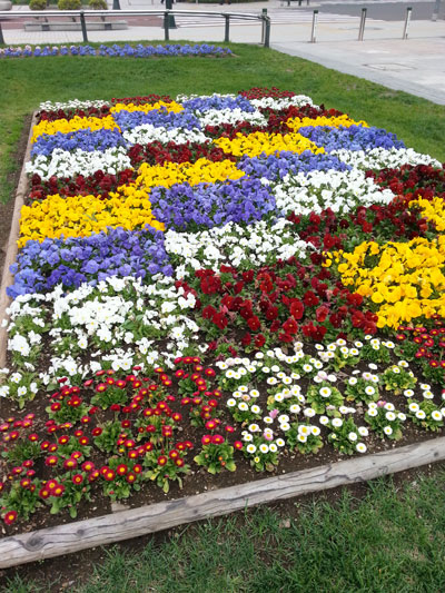 大通公園の花壇