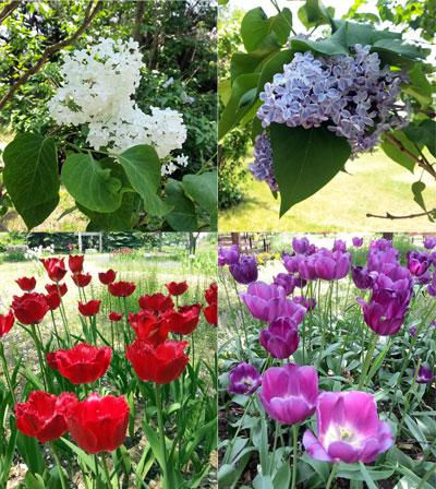 さっぽろ百合が原公園の花