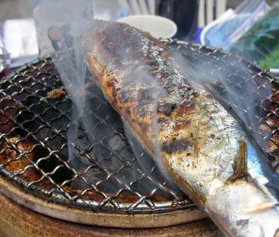 炭火焼秋刀魚