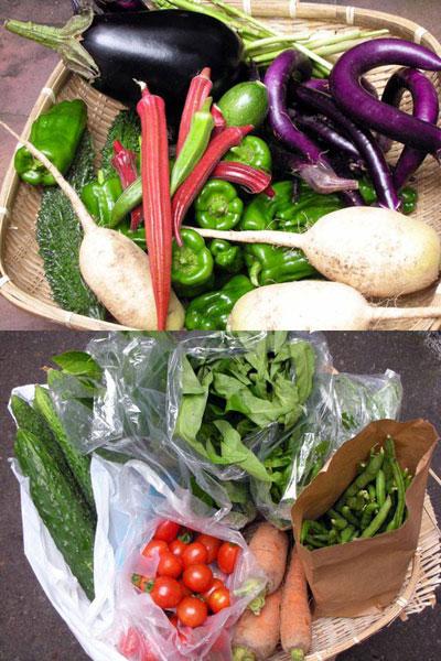 お友達農園の野菜