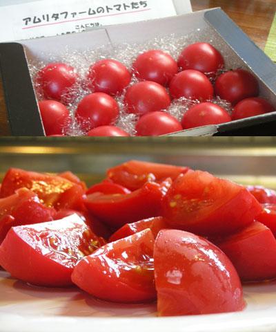 塩トマトとパプリカのグラタン