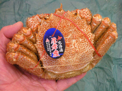 北海道厚岸産の毛蟹