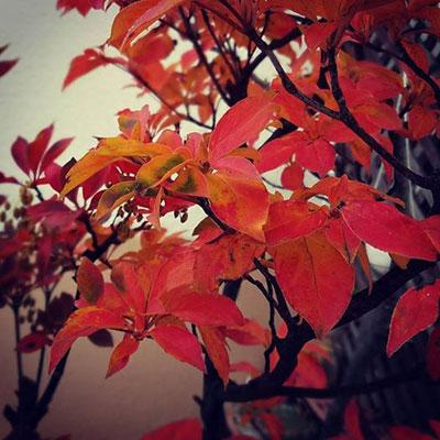 晩秋の風情