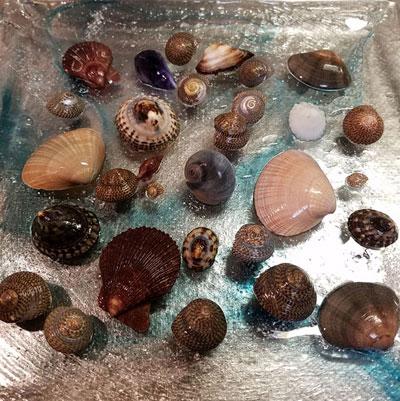 可愛い貝殻