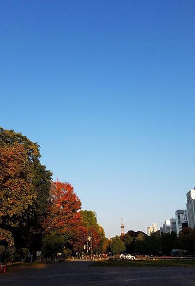 """""""さっぽろ大通公園の秋"""""""
