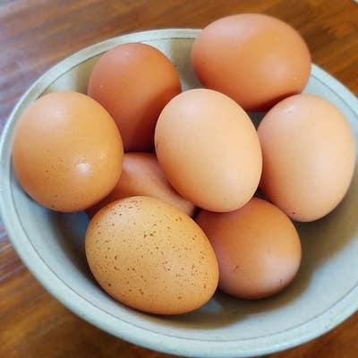 平飼い鶏の初産み卵